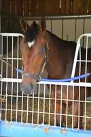 Confirmed for the Preakness: Departing, bred and owned by Claiborne Farm and Adele Dilschneider