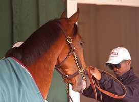 Goldencents and Jockey Kevin Krigger