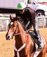 In this photo released by the Maryland Jockey Club, Goldencents, with jockey Kevin Krigger aboard,gallops at Pimlico Race Course on Monday, May 13, in preparation for Saturday's $1 million Preakness Stakes.