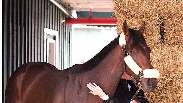 Kentucky Derby winner, Orb, arrives at Pimlico Race Course on Monday, May 13 for Saturday's $1 million Preakness Stakes