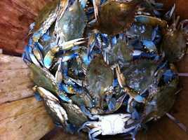 Crab Derby contenders