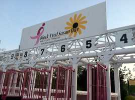 This is the pink starting gate that will be used during Black Eyed Susan Day for racing during the People's Pink Party.
