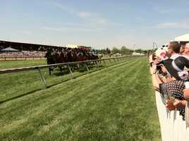 Along the rail at Pimlico on Black-Eyed Susan Day.