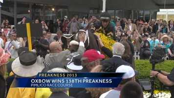 Oxbow is the surprise winner of the Preakness Stakes, upsetting the heavy favorite, Orb, and eliminating the chance of a Triple Crown victory yet again this year.