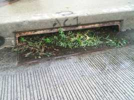 Storm drains start to clog early Thursday. Experts say people should try to remove debris before a storm if possible.