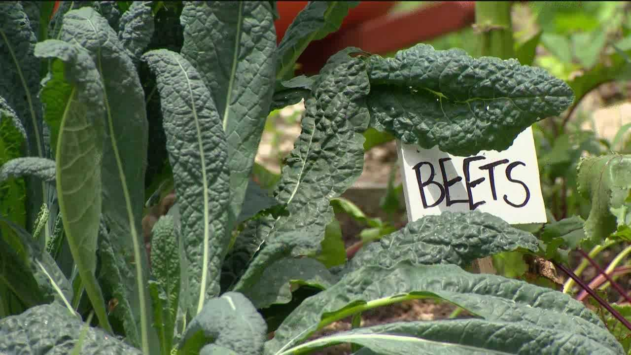 An independent group advocating local healthy foods might lose some of their land to developers as Baltimore City takes bids on a portion of garden land in Hampden.