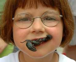 """BugFest -- Sept. 21, Raleigh, N.C. -- Entomology enthusiasts will bug out at the variety of entertainment offered at this pest-ful party hosted by the Museum of Natural Sciences.  Travelers can learn about the creepy-crawly creatures through displays around the museum, stump the experts by bringing in an unusual bug to identify, or have their face painted to resemble a stag beetle during the """"insectival."""" The bravest of the bunch can bring their appetites to Café Insecta, where those with a craving for a crunchy or slimy treat can sample delights prepared by local restaurants such as Chocolate Chirp Ice Cream or Superworm Enchiladas. General admission is free of charge."""