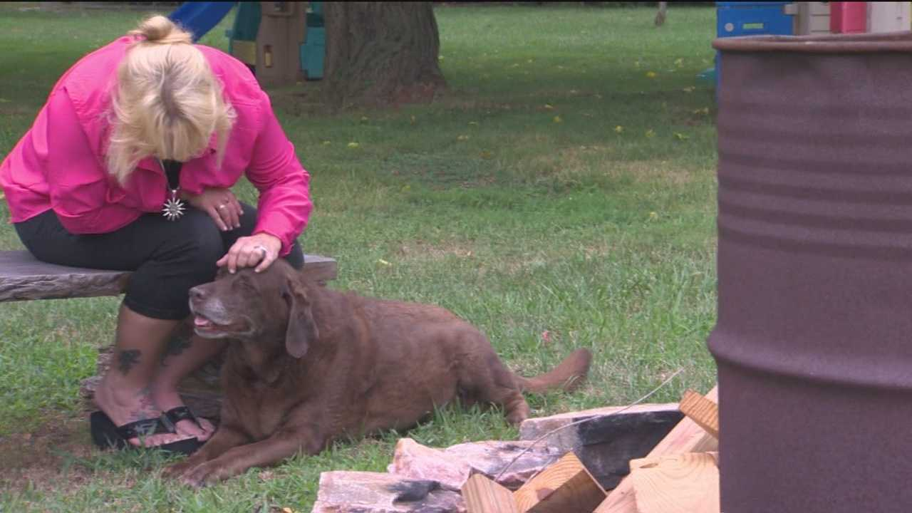 Court case centers on damages allowed to pet owners