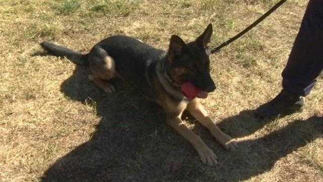 More K-9s join Anne Arundel County police force