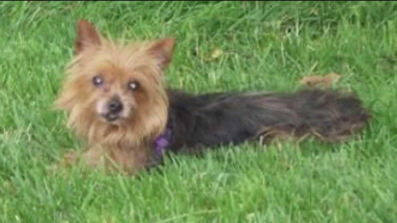 Owner's dog killed in violent pit bull attack