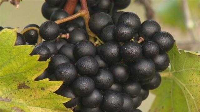 Maryland Wine Festival takes place in Carroll County