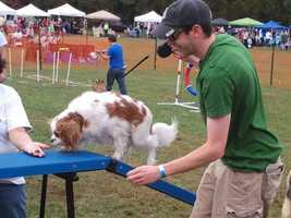 At DogFest, visitors can enjoy the antics of watching their pets try to knock down bowling pins or play a game of hide and seek, as well as see them try out an agility course.