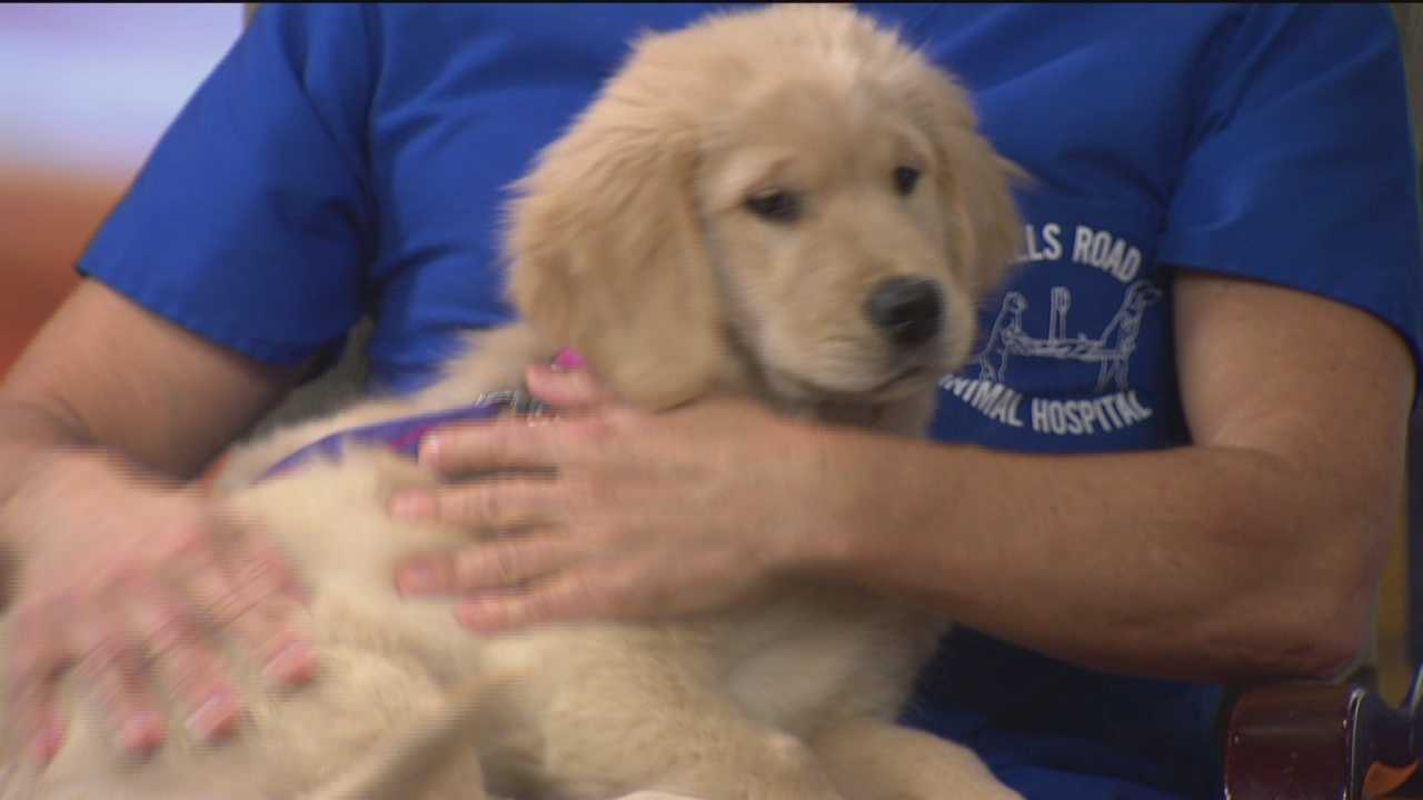 Dr. Kim brings cute puppy, answers questions