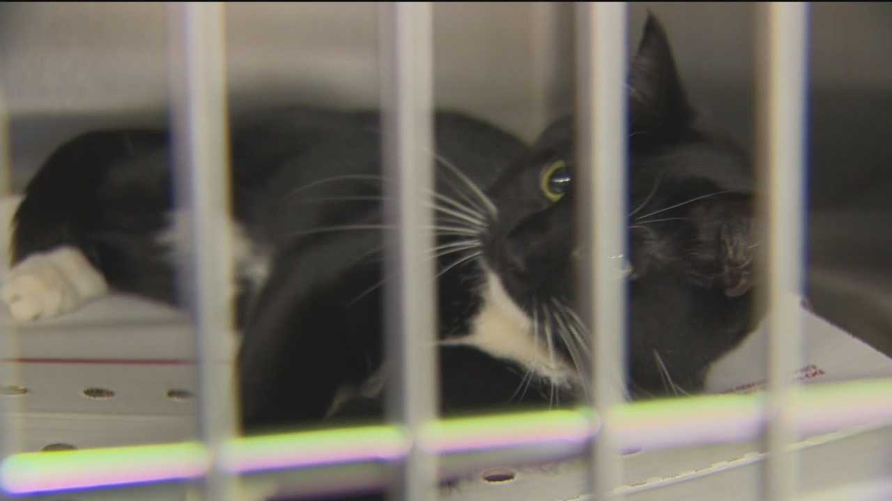 The Maryland SPCA reaches milestone at spay, neuter clinic