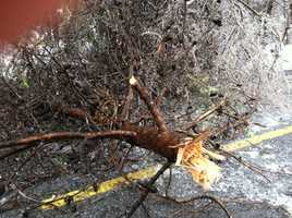 Hereford downed trees
