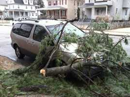 A tree lands on a van along Oakfield Avenue
