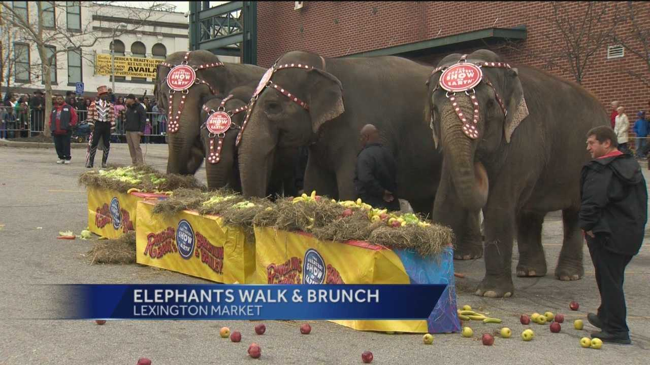 elephant walk.jpg