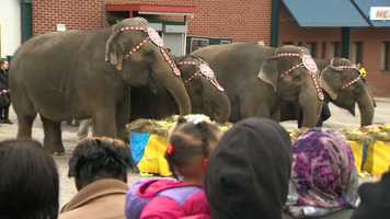The elephants finished their march at Lexington Market, where they enjoyed the 31st annual Brunch with the Elephants.