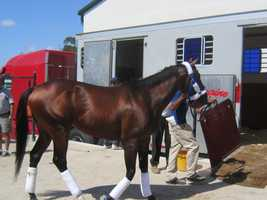 Preakness candidate Social Inclusion hit the road for Pimlico Wednesday morning after returning to the racetrack for the first time since being scratched from Saturday's Sir Bear Stakes with a bruise in his right front foot. The son of Pioneerof the Nile jogged to the satisfaction of trainer Manny Azpurua and Rontos Racing Stable Corp.'s Ron Sanchez.