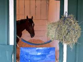 May 8: Social Inclusion arrives at Pimlico