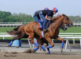 May 10: Ring Weekend, who captured the Tampa Bay Derby (G3) and finished second in the Calder Derby, missed the Kentucky Derby due to a fever.