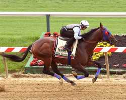 May 12: Rontos Racing Stable Corp's Social Inclusion breezed a half-mile in 47 seconds at Pimlico Race Course Monday morning in preparation for a scheduled start in Saturday's Preakness.