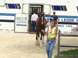 May 12: California Chrome arrives at Pimlico Race Course in Baltimore, Maryland