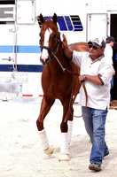 May 12:California Chrome arrives at Pimlico Race Course in Baltimore, Maryland