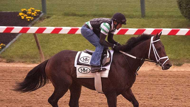 May 13:Skychai Racing and Starlight Racing's General a Rod galloped 1 1/2 miles under exercise rider Joel Barrientos. Trainer Mike Maker said he will school in the gate Thursday following his morning gallop.