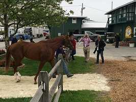May 13:Pablo Del Monte arrives at Pimlico Race Course.