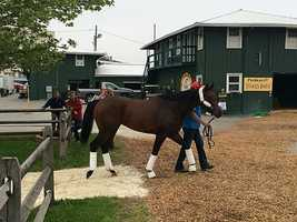 May 13: Bayren arrives at Pimlico Race Course