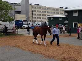 May 13:Dynamic Impact arrives at Pimlico Race Course