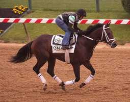 """POST 2: General a Rod (Odds 15-1)Owner - J. Armando RodriguezTrainer - Michael MakerJockey - Joel RosarioBreeder - Hare Forest Farm""""We will save some ground. Hopefully, he'll get a cleaner trip than he got in Kentucky. He's doing good. That's why we're here,"""" Maker said."""