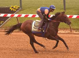 May 15:Hall of Fame trainer Bob Baffert, seeking his sixth Preakness victory, said he would relish having Bayern's rider, Rosie Napravnik, make history as the first female jockey to win Maryland's signature race.