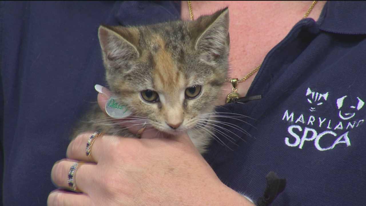 SPCA shares recipe for cat treats