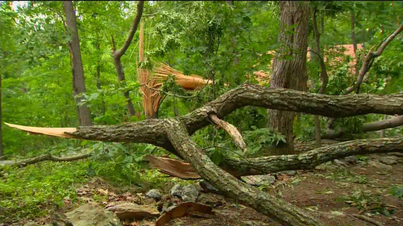River Valley Ranch tree damage