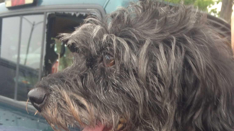 Dog left in hot truck