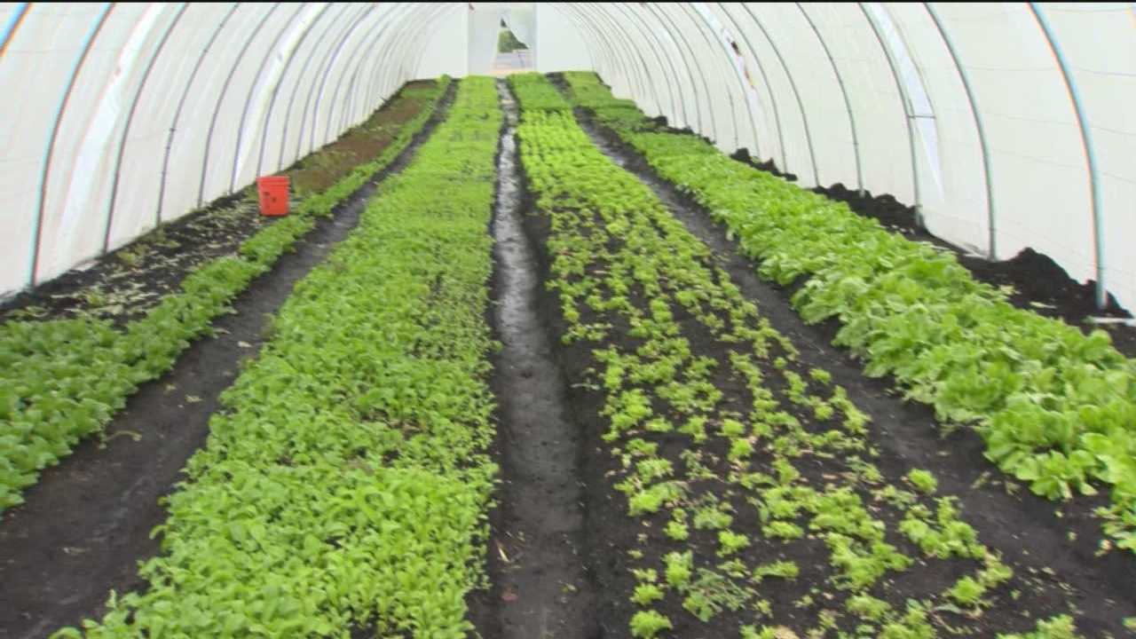 Lettuce takes over once trash-filled lots