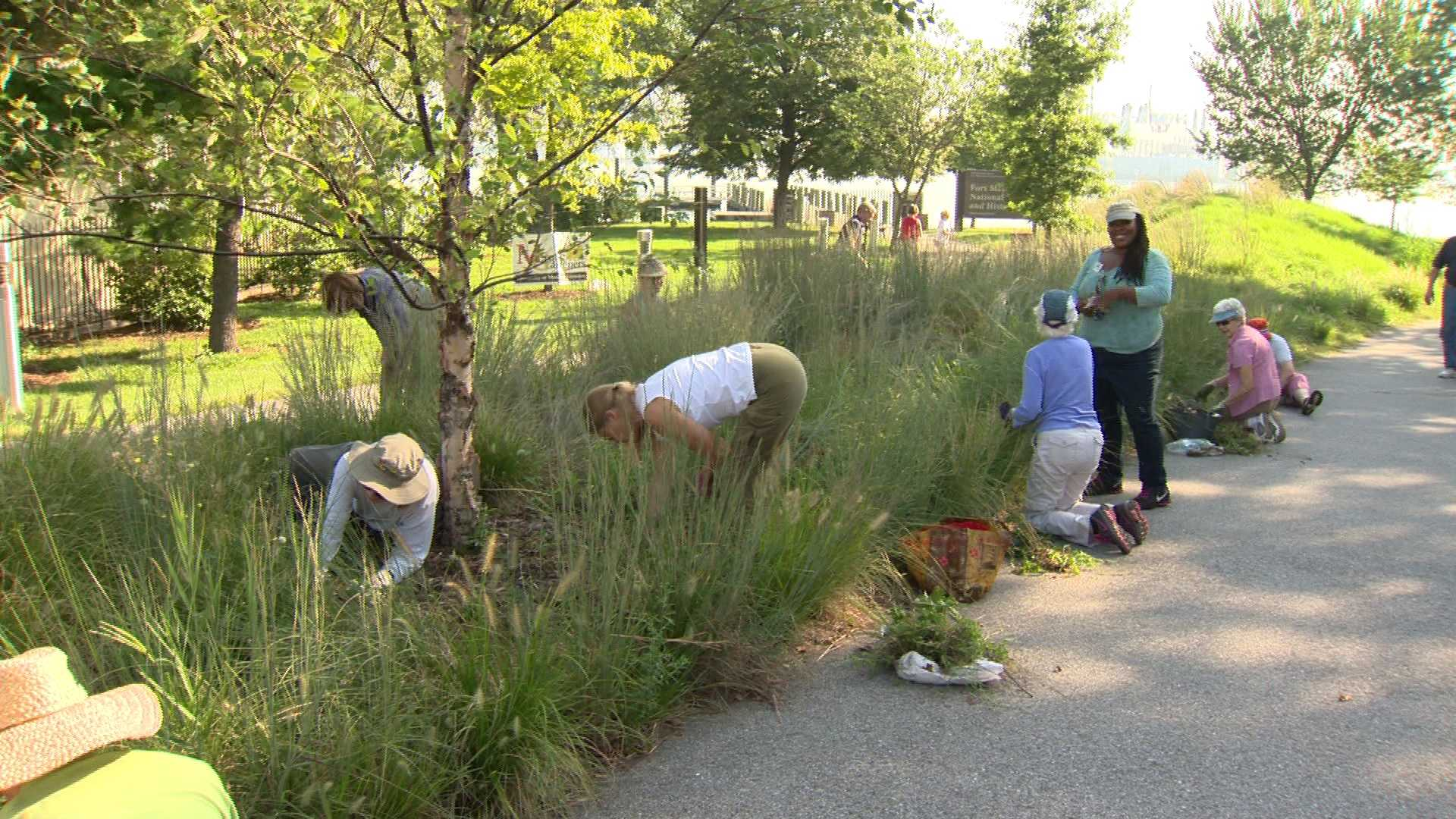 Fort McHenry weed gardeners