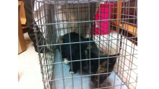 feral cat captured