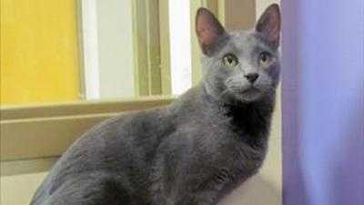 SPCA cat (generic) - 29405488