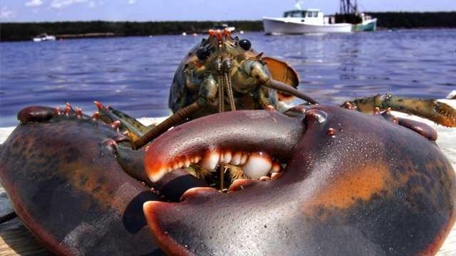 Fishing industry Lobster.jpg