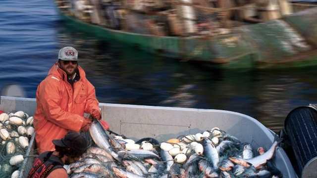 Fishing industry.jpg
