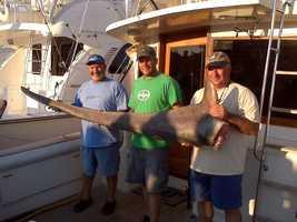 Capt. Stan Glaskin, David Vetelino and Robert Glaskin hold the shark's tail.Capt. Stan Glaskin, David Vetelino and Robert Glaskin hold the 8-foot tail of the thresher shark.