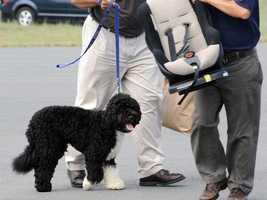 White House staff hold the Obama family dog, Bo, as it arrives at the Cape Cod Coast Guard Air Station.