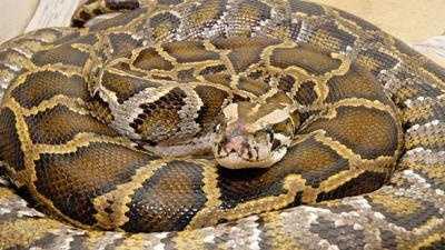 Python -- NEW - 16374088