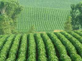 6.) Herbicide-Flavored Food