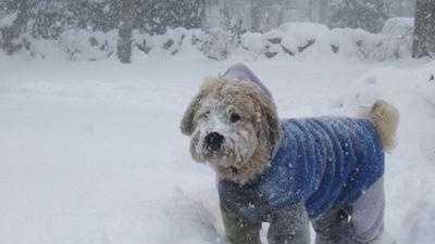 Dog In Snow - 6970893