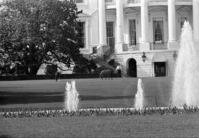 In addition to dogs and parakeets, John F. Kennedy's daughter, Caroline, kept ponies, seen grazing on the lawn of White House in 1962.