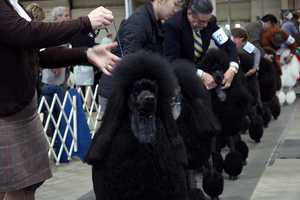 More on Randy's dog coming up, but here are some of the other dogs in the competition.